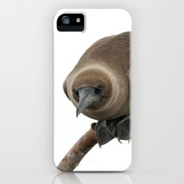 Curious young boobie iPhone Case