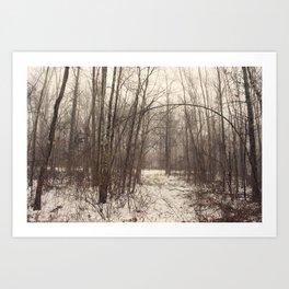 Bare Woods Art Print