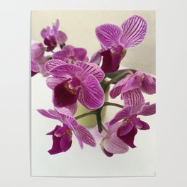 Pink and Sweet Petite Orchids Poster