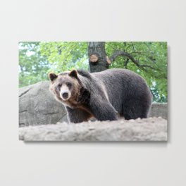 Hey Boo Boo do you want to get some picnic baskets? Metal Print