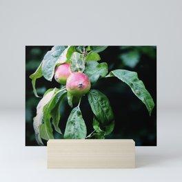 The Old Crabapple Tree II Mini Art Print