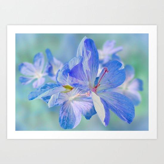 FLOWERS - Geranium endressii Art Print