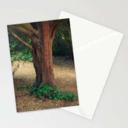 Natures Solitude Stationery Cards