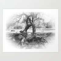 The Old Twisted Tree Art Print