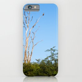 Exotic Bird of prey in bald Tree against clear blue sky | Sri Lanka travel photography iPhone Case