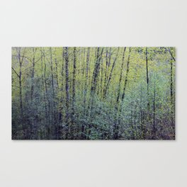 Spring Forest Trees Canvas Print