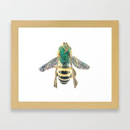 sweat bee, abeille verte, agapostemon Framed Art Print