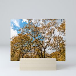 Orange leaves, high trees, clouds in the sky Mini Art Print