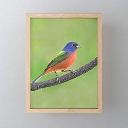 Painted Bunting Framed Mini Art Print