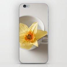 Daffodil in a Cup iPhone & iPod Skin
