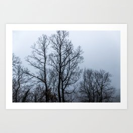 Naked tree in a foggy day Art Print