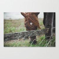 pony Canvas Prints featuring pony by Vee Vee