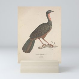 Vintage Illustration - Avium Novae (1825) - Spix's Guan Mini Art Print