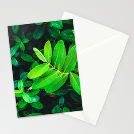closeup fresh green leaves texture background Stationery Cards