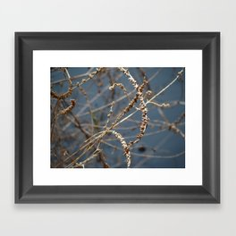Lake Weed Framed Art Print