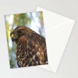 Young Red-Shouldered Hawk in a Desert Willow Stationery Cards