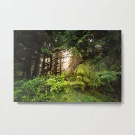 The Light Within - Beauty in the Washington Rain Forest Metal Print