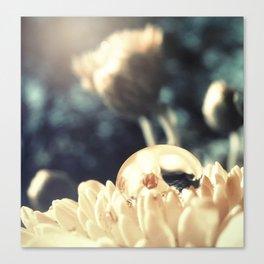 Pure Light Canvas Print