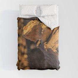 Golden Hour Bearded Dragon Comforters