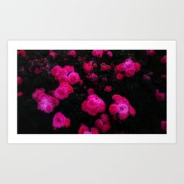 Bunches of Roses Art Print