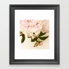 Peony No.3 Framed Art Print