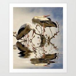 Weißstorch Paar (Ciconia ciconia) Art Print