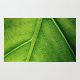 Macro photo of green leaf. Concept nature and ecology. Rug