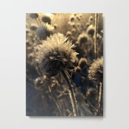 Bee Balm Frost Metal Print