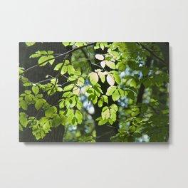 Light in the leaves Metal Print