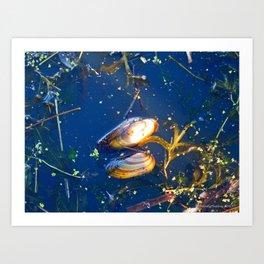 Clams in a Tidal pond Art Print