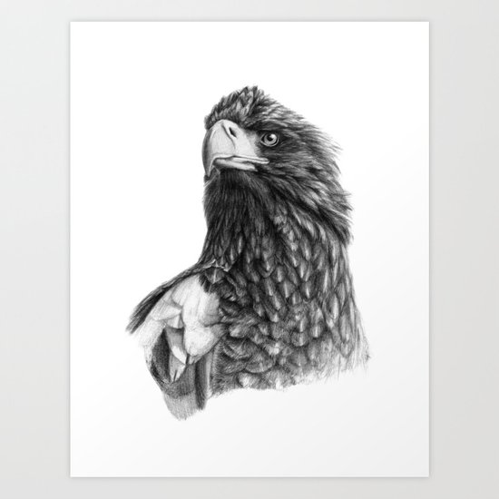 Steller's sea eagle G2013-073 Art Print