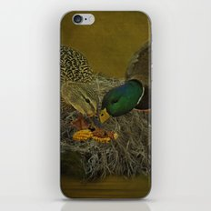 Mallards Having A Meal iPhone & iPod Skin