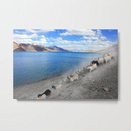 Pangong Tso lake, India Metal Print