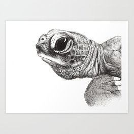 Baby Leatherback Turtle Art Print