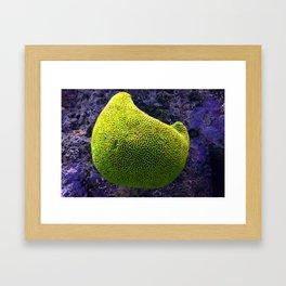 Lime green sea creature Framed Art Print
