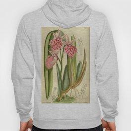 Odontoglossum platycheilum 143 8718 Hoody