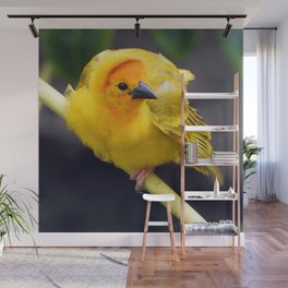 Male Orange Weaver Wall Mural
