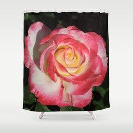 Multi-Hued Rose Shower Curtain