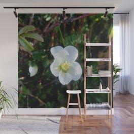 flower and light - White flower 2 Wall Mural