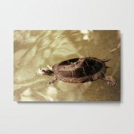 Swiming Metal Print