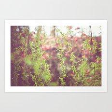 Willow leafs Art Print