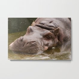 Huge bored Hippopotamus Metal Print