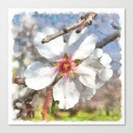 Almond Blossom Study Watercolor Canvas Print