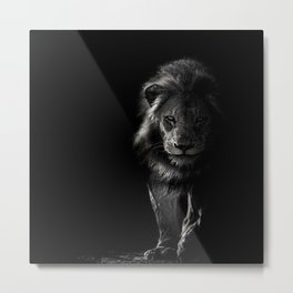 black_and_white,lion Metal Print