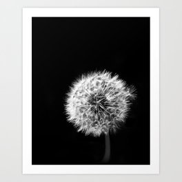 Black and White Dandelion Art Print