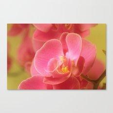Pink Pastel 32 Canvas Print