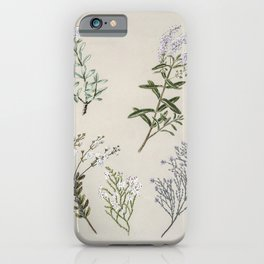 Antique plant Hebe pinguifolia drawn by Sarah Featon (1848-1927) iPhone Case