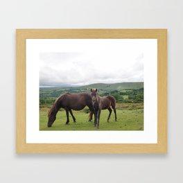 Wild Ponies of Dartmoor Framed Art Print