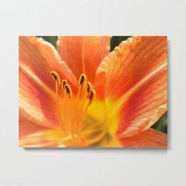Orange lily macro Metal Print