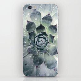 Botanical Print, Agave, Cactus Print, Succulent Art iPhone Skin